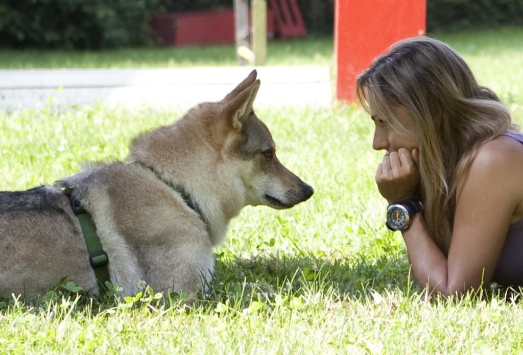 Aprendizaje por imitación en perros