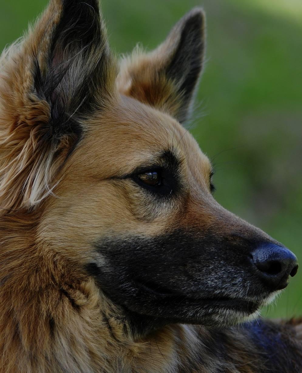 Entrenar perros si es como (ahora) te lo han contado