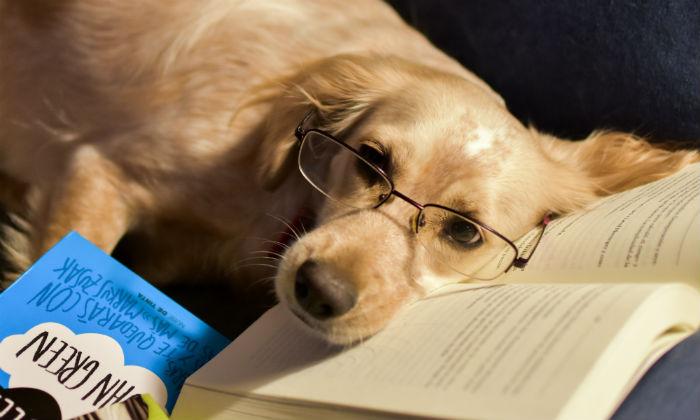 Algunos libros para profundizar en el conocimiento del perro