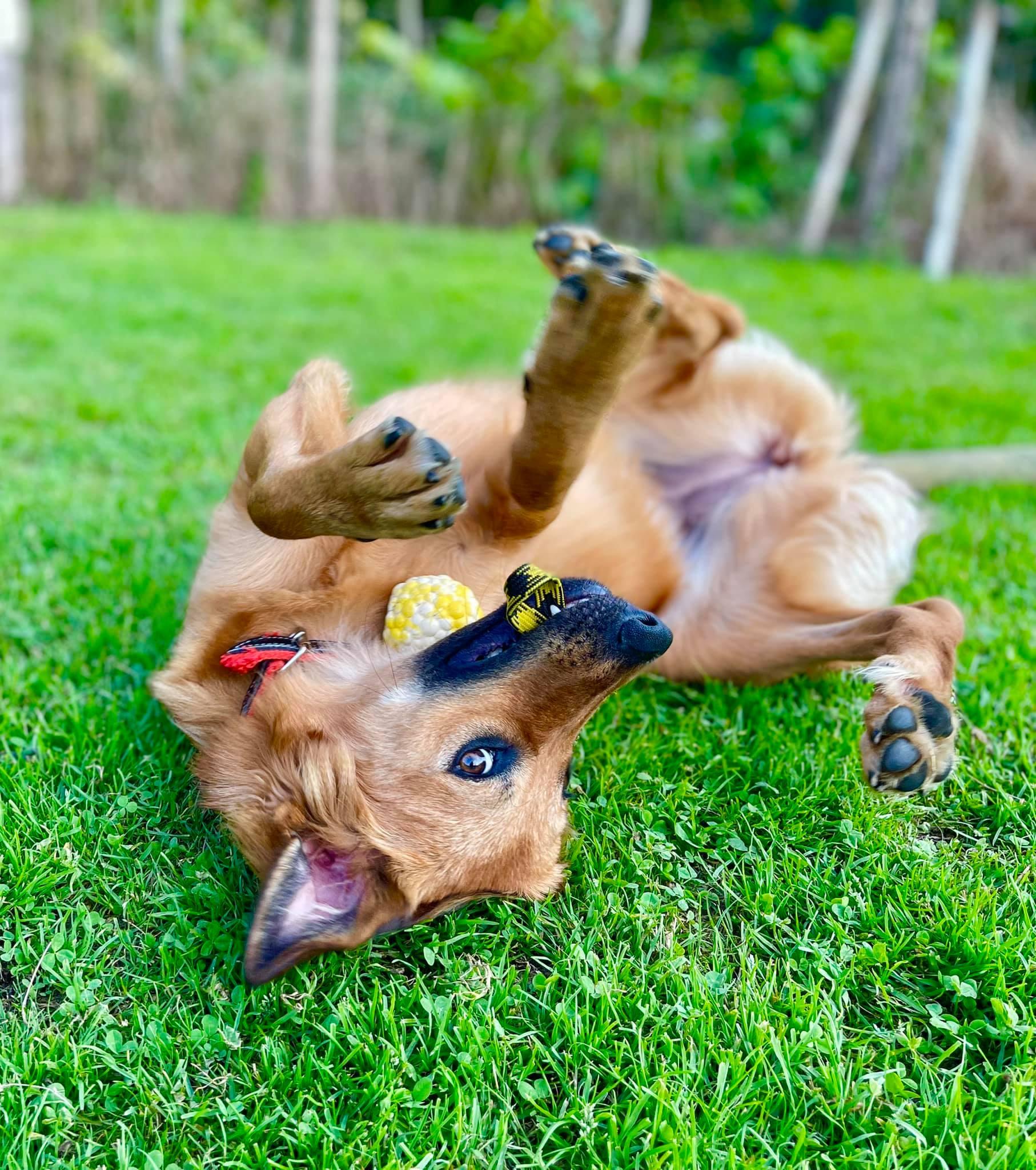 Quiero ser Adiestrador o Educador Canino – Guía Completa